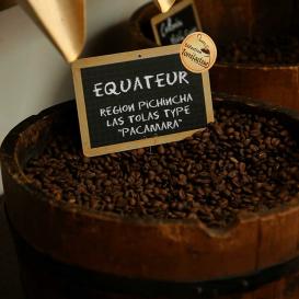 Equateur - Région Pichincha - Las Tolas type « Pacamara »