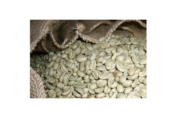 Un peu d'information sur le café vert