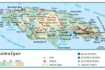 Café en grain: découvrez le Blue Mountain de la Jamaïque